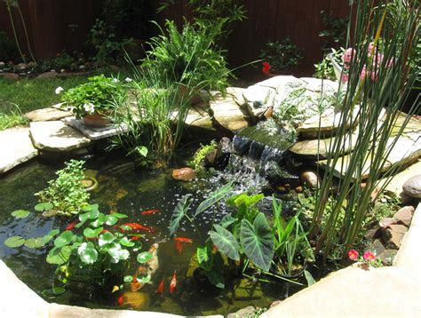 backyard pond plants cool pond plants gorgeous this would look awesome in the
