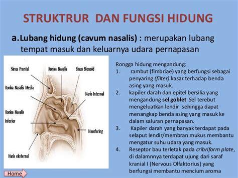 Pengait Benda Asing Telinga Dan Hidung organ sistem pernafasan baru
