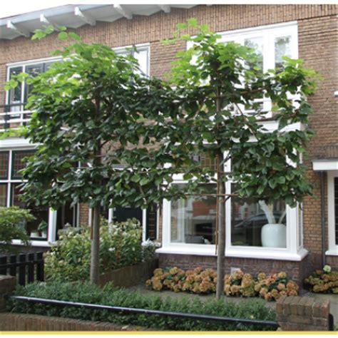 huis kopen in quebec leilinde kopen tuincentrum nl