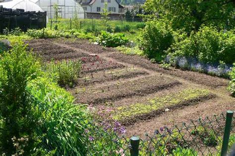 Big Vegetable Garden Behind A Country House In Switzerland Big Vegetable Garden