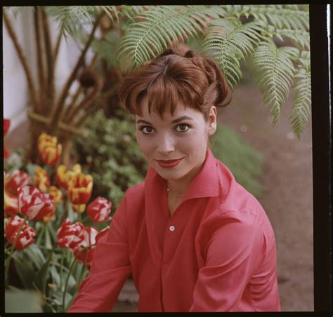 elsa film in english elsa martinelli the italian actress and model who starred
