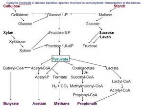 Complex food web of erse bacterial species involved in carbohydrate