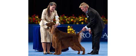 irish setter national dog show the kennel club of philadelphia