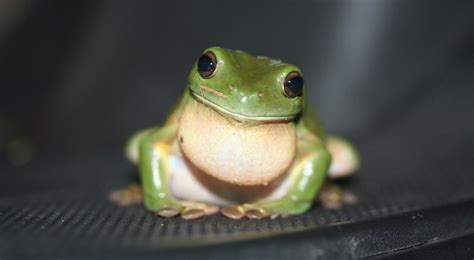 do frogs make good pets yes if you don t have the quot icks quot