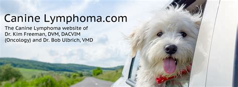 symptoms of lymphoma in dogs canine lymphoma symptoms canine lymphoma
