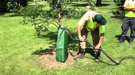 tree watering bags youtube