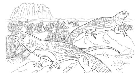 sahara desert vulture coloring sheets coloring pages