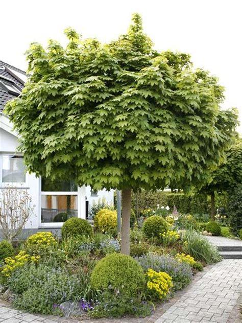 Kleine B Ume Vorgarten 370 by Die Besten 25 Kleine B 228 Ume Ideen Auf Bl 252 Hende