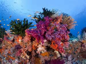what color is coral reef raja at underwater coral reefs with beautiful colors of