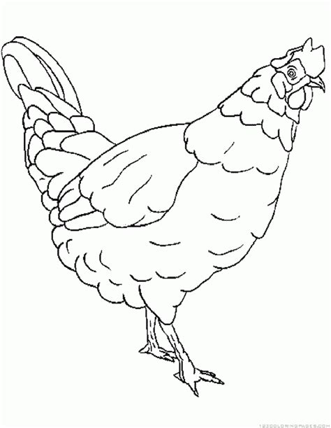 free coloring pages of hen