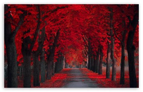 wallpaper computer full screen love beautiful wallpapers for desktop full screen wallpapersafari