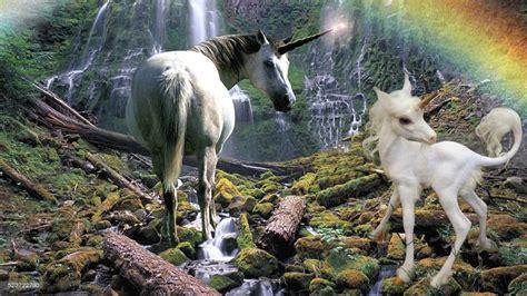 Imágenes De Unicornios Verdaderos | unicornios reales captados en c 225 mara youtube