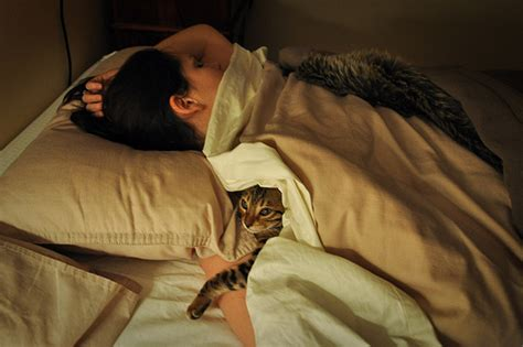 my sleeps against me sleeping with cats is for you bagheera the diabetic cat