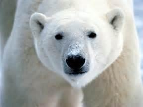 Uratuj arktyk podpisz petycj greenpeace zatrzymaj