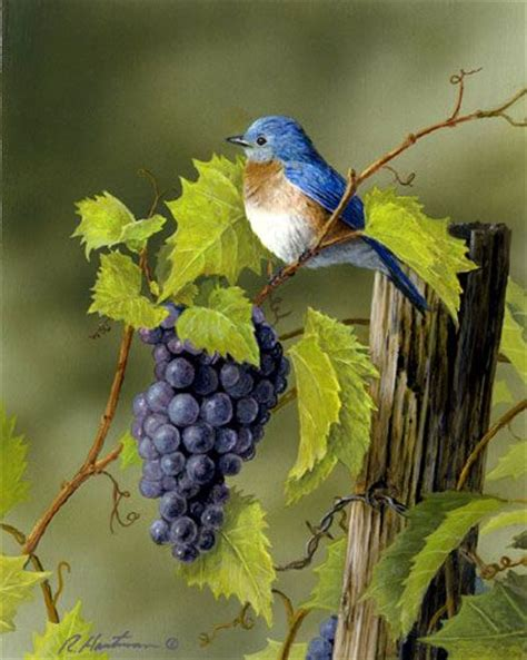 25 best ideas about bluebirds on pinterest beautiful