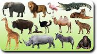 """Search Results For """"animals"""" – Creative Chinese"""