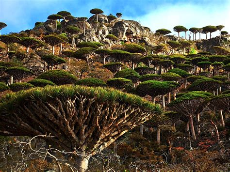 The Place On Earth Most Place On Earth Socotra Island In Yemen