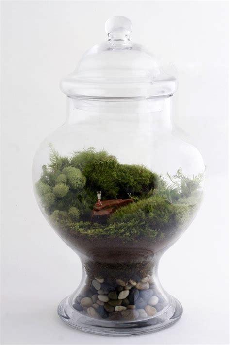 twig terrarium piccoli giardini in vetro dentro casa