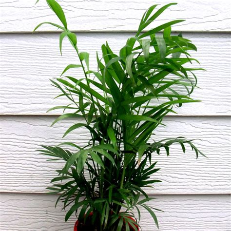 plants eco green office plants