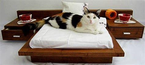lit pour petit chien lit de luxe pour chat ou petit chien cedel le de moon