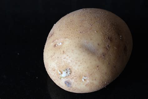 like a potato no waste tastes great we condiment waste guys