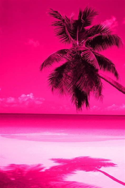 pink palm trees palm trees pink wallpaper
