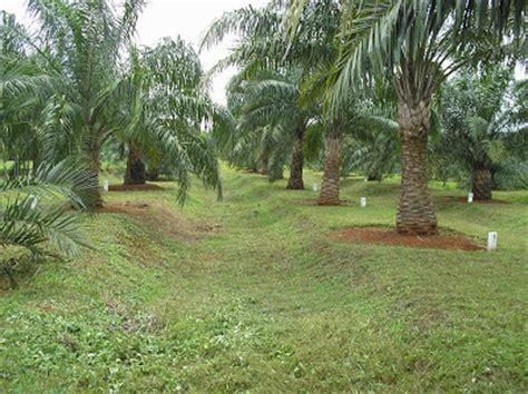 forum komunikasi pbt mekarsari sumber benih kelapa sawit