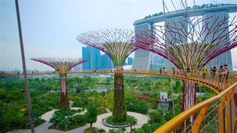 Singapore Gardens By The Bay - gardens by the bay pictures view photos images of