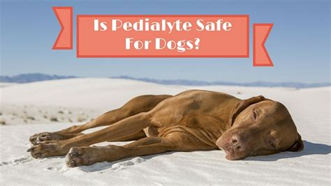 is pedialyte for dogs is pedialyte safe for dogs smart owners
