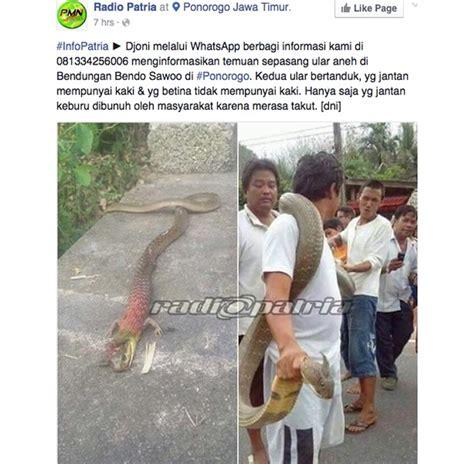 film siluman ular di indosiar geger ular bertanduk dan berkaki ditangkap di ponorogo