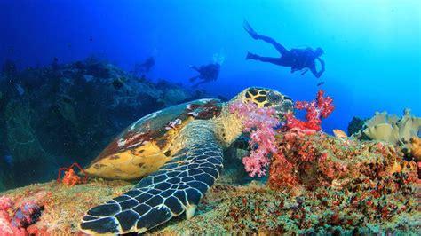 dive phuket phuket scuba diving thailand liveaboards and scuba clubs
