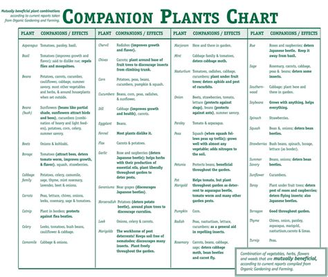 herb growing chart companion planting smart health talk