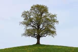 free photo tree spring nature time of year free image on pixabay 740901