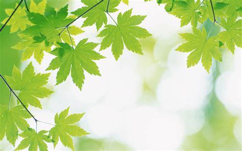 imagenes de naturaleza verdes naturaleza wallpapers