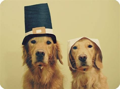 dogs thanksgiving 23 pets who are not enjoying thanksgiving theblaze