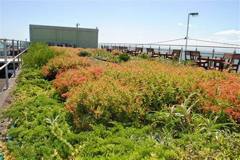 green roofs bringing nature to your doorstep environmental rehabilitation and indigenous landscape