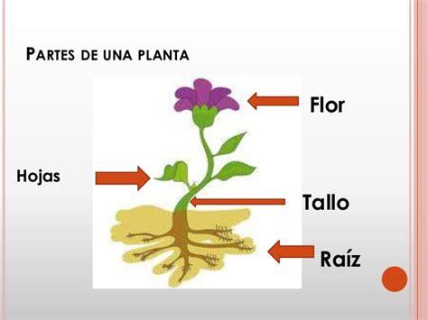 que es layout de una planta qu 233 es la germinaci 243 n de una planta y reforestaci 243 n
