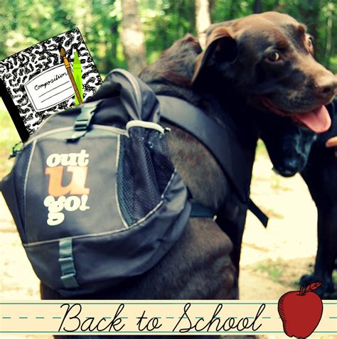 school for dogs walking cat sitting back to school schedule changes the out u