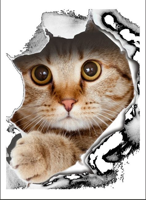 wall stickers cats wall stickers cats best free home design idea