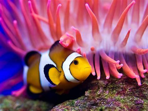 fish for life a pez payaso animales acuaticos
