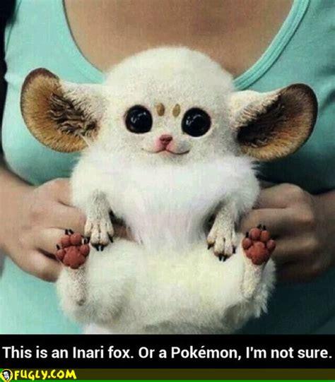 that looks like a fox fox looks like a