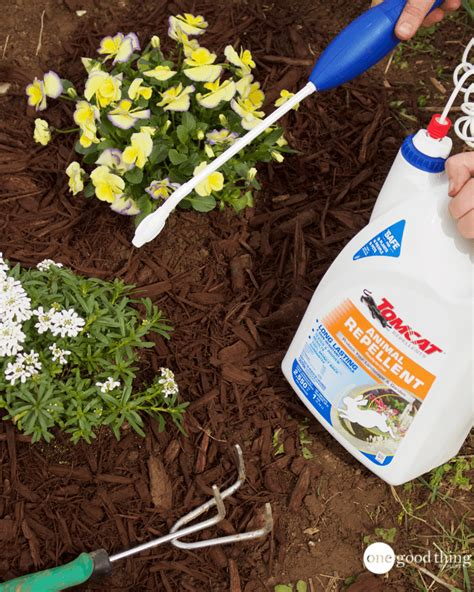 how to keep cats out of flower beds how to keep cats out of flower bed how to tips on keeping