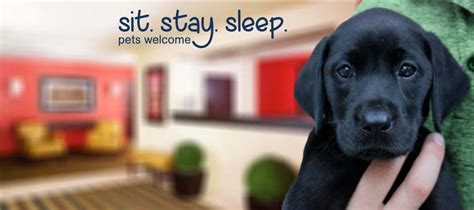 pet friendly places to stay dog cat and horse friendly extended stay america pet friendly hotels a hotel for