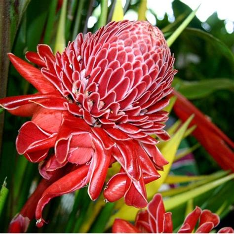 buy tropical plants types of tropical flowers dictionary of identifying