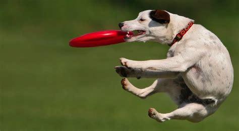 imagenes de animales en movimiento imagenes perros en movimiento imagui