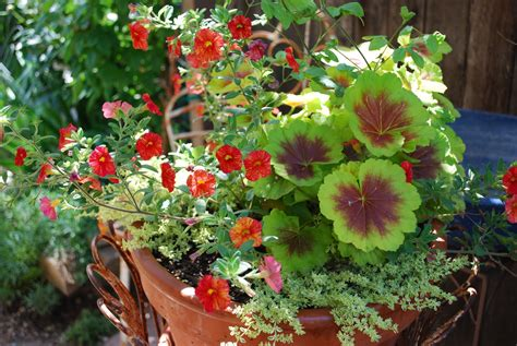 Potted Gardens Ideas The Garden Garden Designers Roundtable Containers