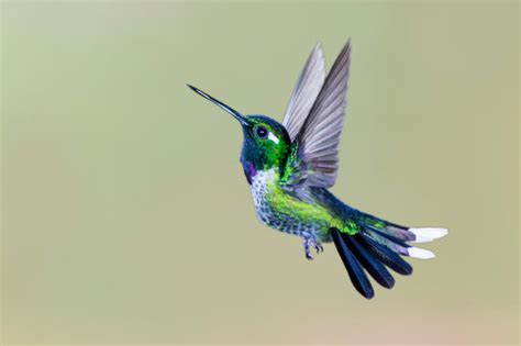 9 adorable facts about hummingbirds mental floss