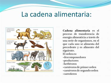 cadena alimenticia funcion cadena alimentaria ppt video online descargar