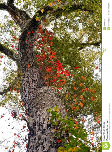 tree curve towards stock photos tree curve towards stock images alamy colorful autumn tree branch upward royalty free stock photo image 20995095