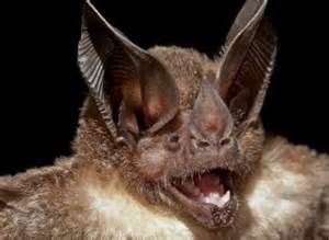 is a bat blind blind the potential to use their inner bat